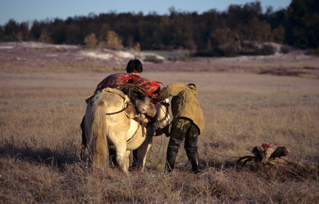 Loading a reindeer on the horse, Kamchatka