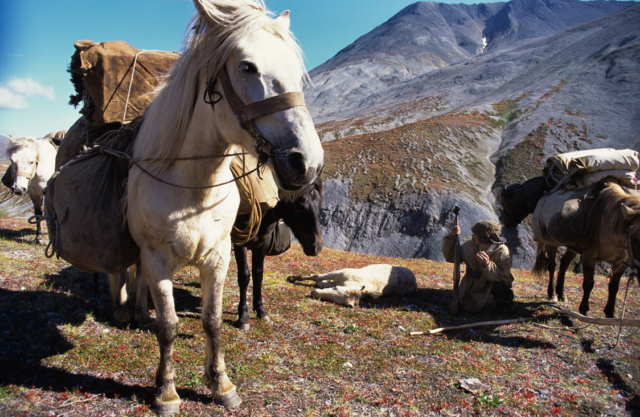Koryak with horses and a tire young foal, Kamchatka